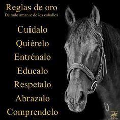 De todo amante de los caballos                                                                                                                                                     Más Equine Quotes, Horse Quotes, Horse And Human, Vet Med, English Riding, Horse World, Horse Stables, Mundo Animal, Human Emotions