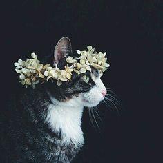 Çiçekli taç ne kadar da yakışmış :)
