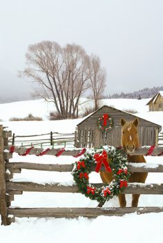 1180421.  Horse on Soward Ranch decorated for the holidays Antelope Valley Creede Colorado