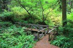 Prairie Creek Redwoods State Park California