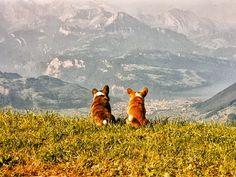 Cardis on a mountainside... this makes me smile :)