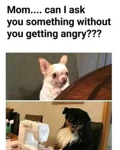 Happy National Dog Day! #Memes #Dogs #Cute #Animals #NationalDogDay Crazy Funny Memes, Really Funny Memes, Funny Animal Memes, Stupid Memes, Funny Relatable Memes, Hilarious Memes, Ugly People Memes, It's Funny, Memes Humor