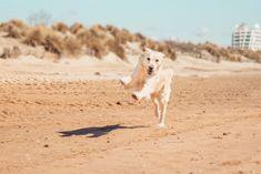 La Leishmaniose canine, c'est quoi ?
