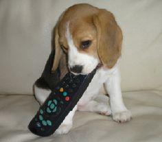 Darci - typical male hogging the remote