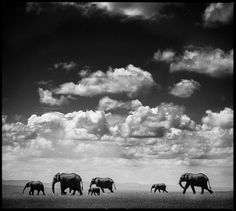 Under the clouds I - Laurent Baheux - http://www.yellowkorner.com/photos/1474/under-the-clouds-i.aspx