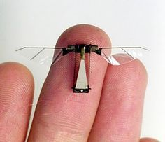 Well, let's talk MICRO. Can't get much smaller than that, I suppose, if you wish to see it flying. Micro Flying Robot.