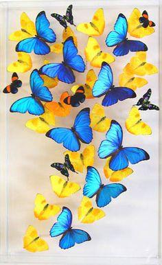 Butterfly Gallery Butterfly Art - I want!