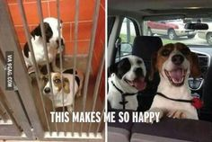 You can change a dog's life forever