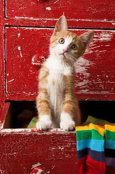 Orange Tabby Kitten In Red Drawer by Garry Gay with Pin-It-Button on FineArtAmerica