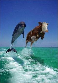 Delfín y Vaca
