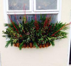 Christmas evergreen window box