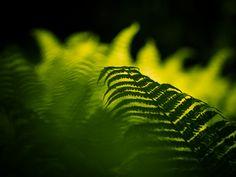 Balance: An atmospheric photograph of a fern.