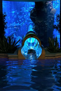 Water slide through Shark Tank at the Golden Nugget Hotel and Casino in Las Vegas, Nevada. Water slide through Shark Tank in Las Vegas Vacation Places, Dream Vacations, Places To Travel, Places To See, Travel Destinations, Vacation Travel, Travel Europe, Dream Vacation Spots, Croatia Travel