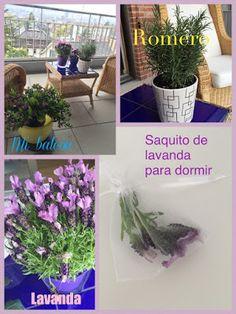 Mi Cuba Azul: Romero para los exámenes y Lavanda para Dormir. Switzerland, Lavender, Flowers
