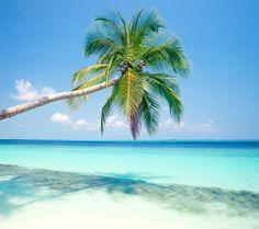 caribbean beaches | beaches,beach,sea,blue,caribean,coconut,palm,coco tree,blue sky,