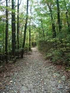 The Pinhoti Trail System connects major long-distance trails in Alabama to the Appalachian Trail via the Benton MacKaye Trail. Dalton acts as one of the four main hubs of entrance and acts as a perfect spot for the day hike or long wilderness excursion.