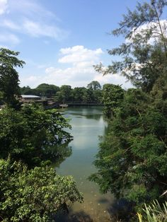 This is not the Amazon Forest. It's River Safari in Singapore