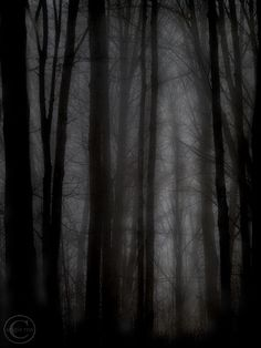 Dark Forest Mysterious Tree Print, Foggy, Deep Dark Woods, Dark Woods, Midnight Forest, Foggy Dark Forest Woods, Black, by BeneathNorthernSkies on Etsy https://www.etsy.com/listing/120268657/dark-forest-mysterious-tree-print-foggy