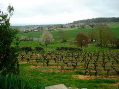 Domaine de la Noblaie Vineyards