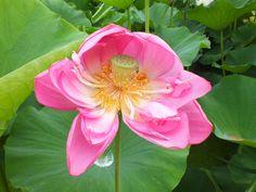 森川花はす 3