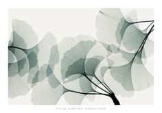 What a soothing piece of art.    Ginkgo Dance Print by Steven N. Meyers.