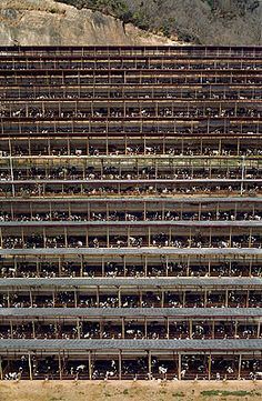99 cent store andreas gursky and photography. Black Bedroom Furniture Sets. Home Design Ideas