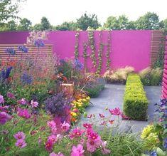 clôture-béton-bois-peint-lila-fleurs-haie-lierre