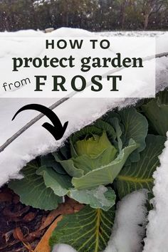 Winter is coming! Learn how to protect your vegetable garden from frost and freeze damage with these four simple and affordable methods. Prevent frost damage and extend your growing season into fall, winter, and early spring. #garden #vegetablegardening #winter #frost #wintergardenprep #wintergarden Vegetable Garden Planning, Vegetable Gardening, Organic Gardening, Home Grown Vegetables, Growing Vegetables, Gardening Hacks, Gardening For Beginners, Spring Garden, Winter Garden