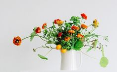 frolic-foraged-flowers-gardenista-current-obsessions.jpg 733×458 pixels