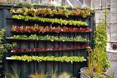 Rain Gutter Salad Bar - Planted Space (hortaliças plantadas em calhas inclinadas para aproveitar a agua da chuva)