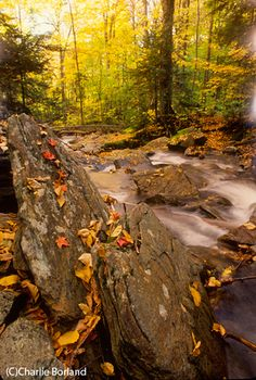 Great tips for making the most of Fall color in your photography