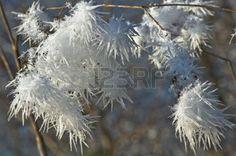 Nadelförmige Eiskristalle auf frostigen Zweigen -  Lizenzfreie Bilder