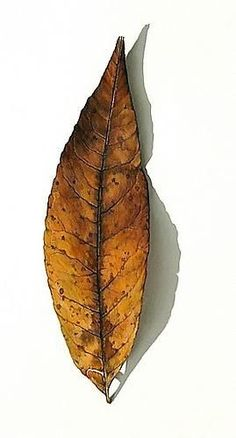 33 Ideas Autumn Tree Drawing Pencil For 2019 Tree Drawings Pencil, Colored Pencil Artwork, Color Pencil Art, Pencil Painting, Colored Pencils, Art Drawings, Unique Drawings, Botanical Drawings, Botanical Art