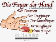 German vocabulary - Fingers of the hand