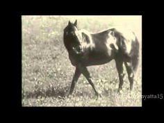 Man O' War Rare Video - YouTube