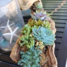 großer Treibholz Zweig mit Sukkulenten bepflanzt large driftwood branch planted with succulents Candles hang on a grDecorated branch with allDropped tree branch with h Driftwood Planters, Driftwood Beach, Driftwood Projects, Driftwood Art, Diy Projects, Project Ideas, Driftwood Ideas, Driftwood Furniture, Driftwood Wedding