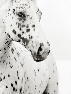 Spots Print By Stephanie Moon.....Showing Lyss this when she wakes up. This will make her morning. =)