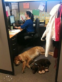 Bring your dog to work day at the Westin! Bella and Zoey