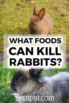 What Foods Can Kill Rabbits Or Make Them Sick? #rabbit #pets #animals #bunny