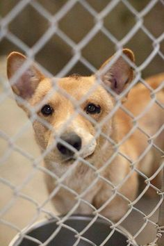 URGENT!! Do you have room for a foster? This sweet little corgi mix has a head wound & if he's not picked up today he will spend the entire weekend in the shelter w/out medical attn! He WILL NOT GET MED HELP AT THE SHELTER! HE NEEDS OUT! Odessa, TX Animal control.Kennel A15. https://www.facebook.com/speakingupforthosewhocant/photos/a.573572332667009.1073741829.248355401855372/746729815351259/?type=1&theater