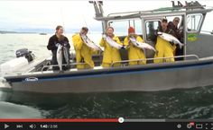 One of the thrills of fishing in Sitka is the potential for fast-action salmon fishing. In our latest video, with the help of Curt Worden and First Priority Media, we captured a typical day of salmon fishing in Sitka, Alaska. Dolly Varden, Kenai River, Sitka Alaska, Fishing Guide, Salmon Fishing, Rainbow Trout, Latest Video, The Help, Action