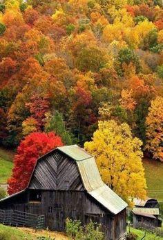 Barn In Full October Colors