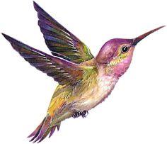 Hummingbird PNG and Clipart Hummingbird Drawing, Hummingbird Pictures, Watercolor Hummingbird, Hummingbird Tattoo, Watercolor Bird, Watercolor Animals, Bird Drawings, Animal Drawings, Images Colibri