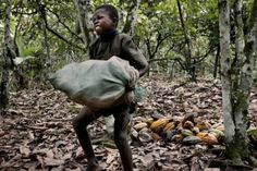 As 7 Marcas de Chocolate que Utilizam Trabalho Escravo Infantil 7 chocolate brands that use slave children work- Le Cacao, Chocolate Company, Chocolate Brands, Cheap Chocolate, Hershey Bar, Human Trafficking, In Law Suite, Working With Children, Poor Children