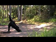 Learn the ancient martial art of Baguazhang - The Eight Trigram Palm Central Coast, Circle Of Life, Eight, Machu Picchu, Tai Chi, Kung Fu, Palms, Wyoming, Martial Arts