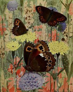 Le Grande-Negre-Hongrois (The Arran Brown).Plate from 'Les Papillons Dans La Nature' by Paul A. Robert. Published 1934 by Éditions Delacha...