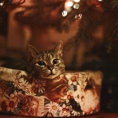 Приятного предновогоднего вечера желает вам http://lifezon.ru/ !