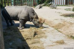 Bratislava ZOO is one of the largest ZOOs in Slovakia. If you have some spare time, want to spend a relaxed day somewhere nice or just love animals, then th Zoos, Bratislava, Hippopotamus, Elephant, Animals, Animales, Animaux, The Zoo, Elephants