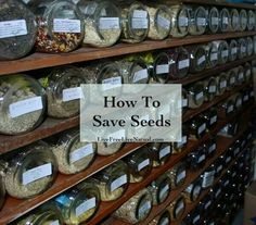How to save seeds.