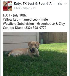 #lostdog #WESTFIELD #KATY #HOUSTON